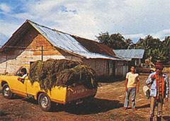 インドネシアにおいて座敷ほうきの原料栽培及び生産を開始