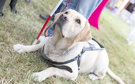 盲導犬協会への支援